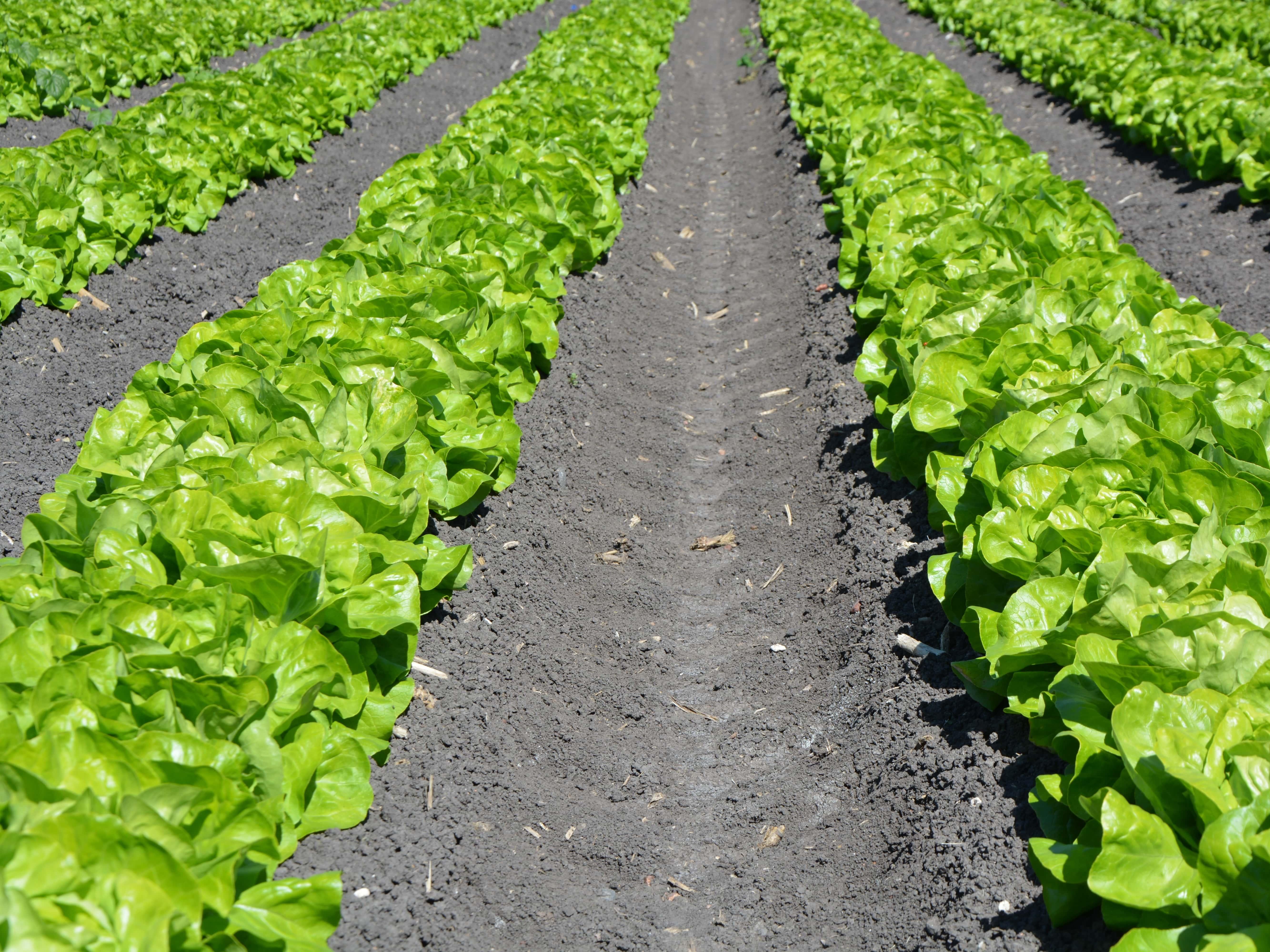 Candidatura Pequenos Investimentos Exploração Agrícola